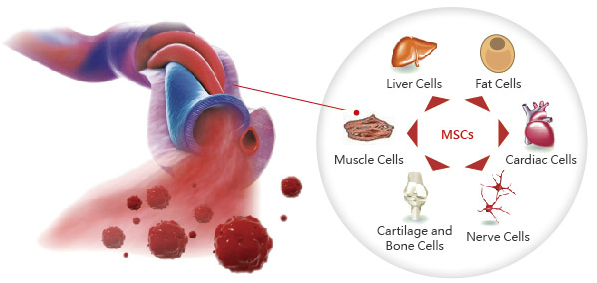 Umbilical cord blood